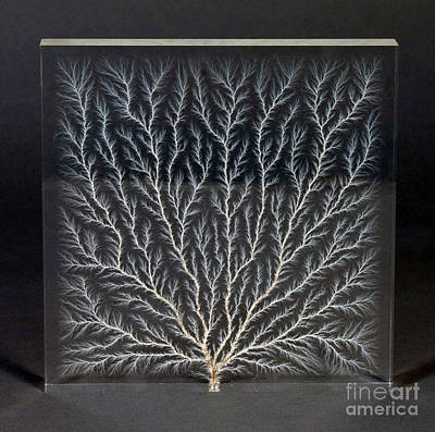 Lichtenberg Figure, Electron Tree Poster by NIST/Science Source