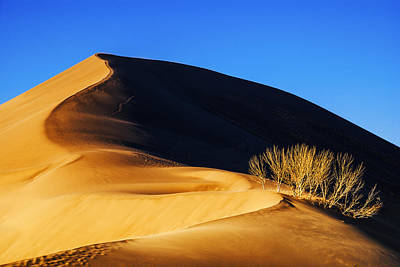 Light And Shadow At Bruneau Dunes State Park In Idaho Poster by Vishwanath Bhat