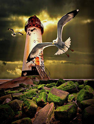Lighthouse With Seagulls Poster by Meirion Matthias