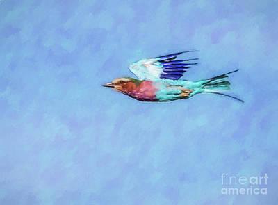 Lilac-breasted Roller Coracias Caudatus In Level Flight Poster by Liz Leyden