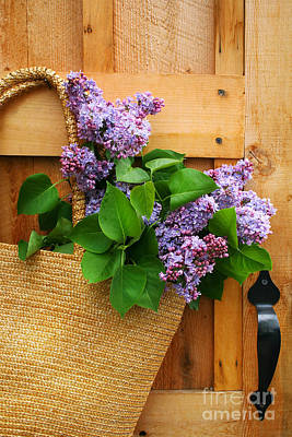 Lilacs In A Straw Purse Poster by Sandra Cunningham