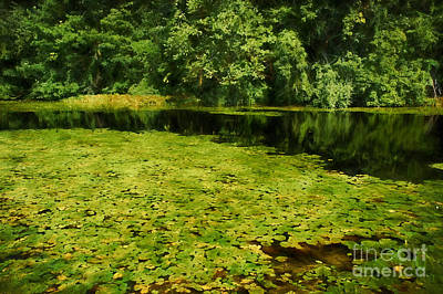 Lily Pads Poster by HD Connelly