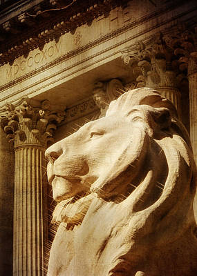 Lion In The Sun Poster by Jon Woodhams