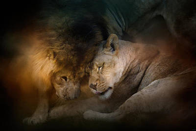 Lion Love Poster by Jai Johnson