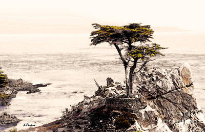 Lone Cypress At Sunset Poster by Linda  Parker