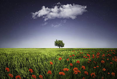 Lone Tree A Poppies Field Poster by Bess Hamiti