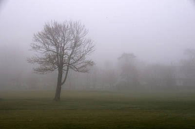 Lone Tree On A Golf Course In The Fog Poster by Todd Gipstein