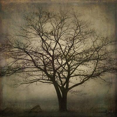 Lone Tree Sq Poster by David Gordon