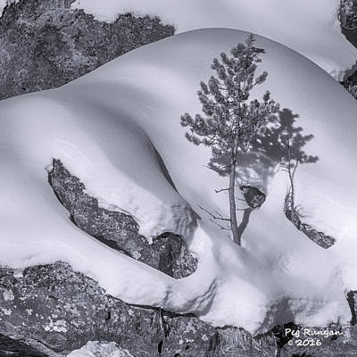 Lonely Tree In Yellowstone Poster by Peg Runyan