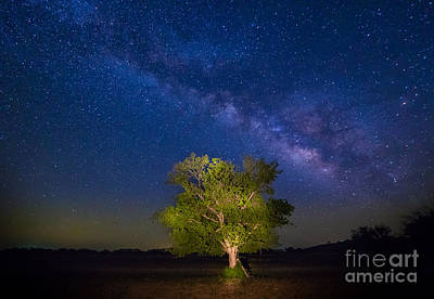 Milky Way Tree Poster by Inge Johnsson