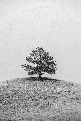 Lonesome Tree Poster by Todd Klassy