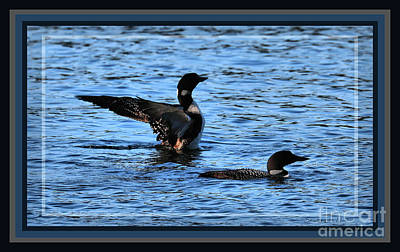 Loon Pair On Tacoma, Framed Poster by Sandra Huston