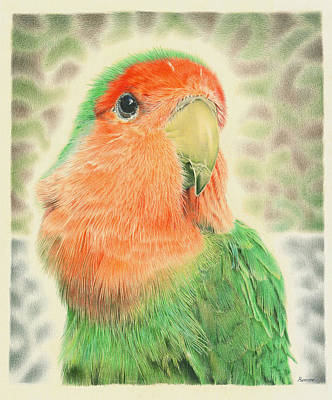 Peach-faced Lovebird Poster featuring the drawing Lovebird Pilaf by Remrov Vormer