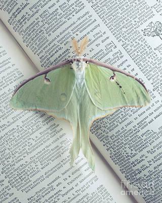 Luna Moth On Book Poster by Edward Fielding