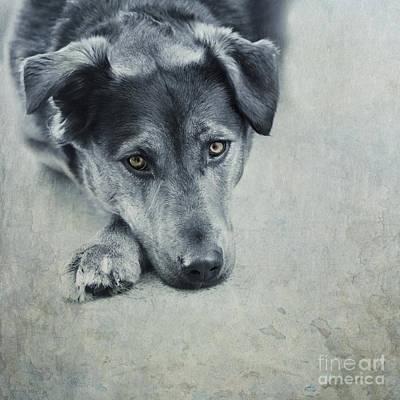 Luna Portrait Poster by Priska Wettstein
