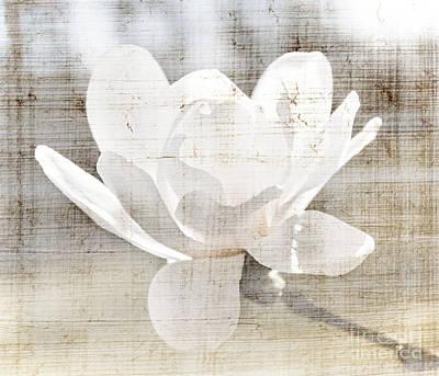 Magnolia Flower Poster by Elena Elisseeva