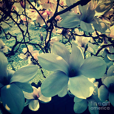 Magnolia Flowers Design Poster by Tanja Riedel