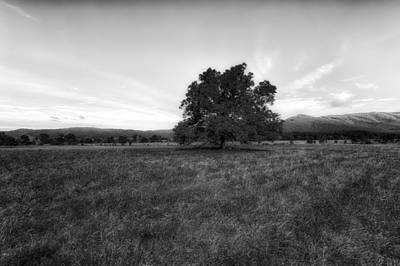 Majestic White Oak Tree In Cades Cove - 4 Poster by Frank J Benz