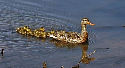 Mama And Ducklings Poster by Kay Lovingood