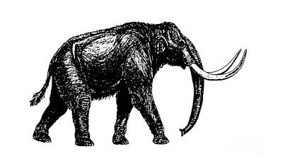 Mammoth Tee Poster by Edward Fielding