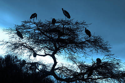 Marabou Stork, Ethiopia, Africa Poster by Aidan Moran