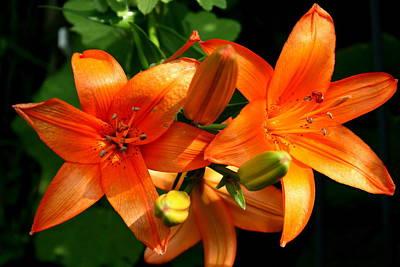 Marmalade Lilies Poster by David Dunham