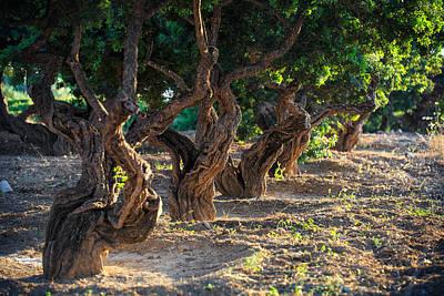 Mastic Tree   Poster by Emmanuel Panagiotakis