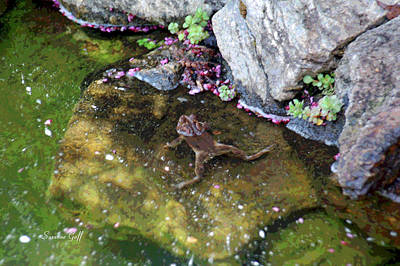 Mating Season At The Frog Pond II Poster by Suzanne Gaff