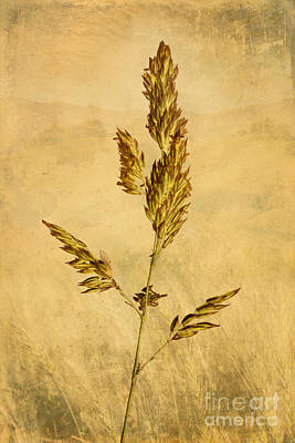 Meadow Grass Poster by John Edwards
