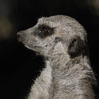 Meerkat Profile Poster by Ernie Echols
