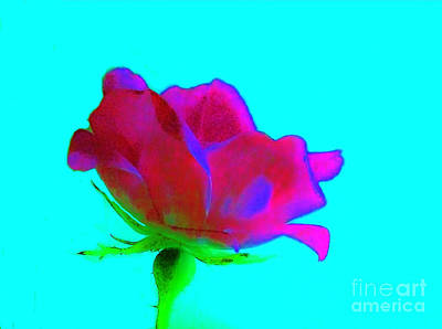 Milti Colored Rose Poster by Marsha Heiken
