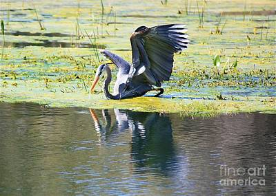 Mirror Mirror On The Marsh Poster by Carol Groenen