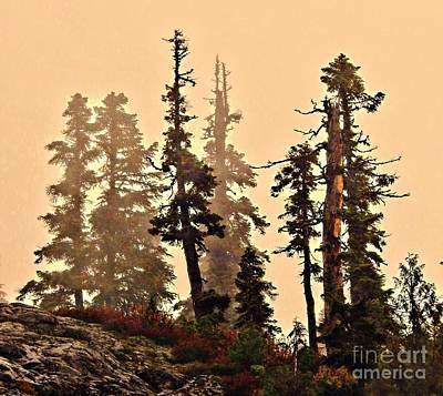Misty Trees Poster by Sandra Peery