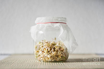 Mix Of Fresh Sprouts Growing In Glass Jar  Poster by Arletta Cwalina