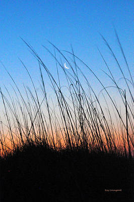 Moon Through The Sea Grass Poster by Kay Lovingood