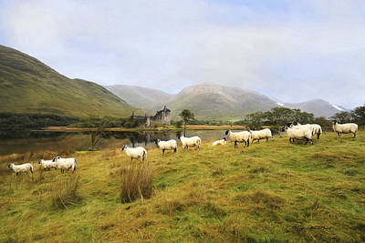 Morning At Kilchurn Poster by Roy  McPeak