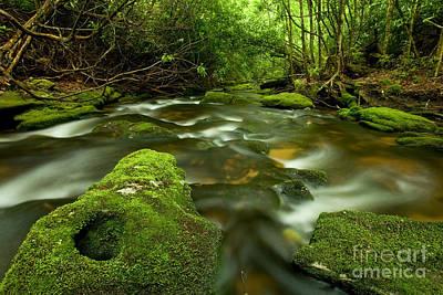 Mossy Rainforest Stream Poster by Matt Tilghman