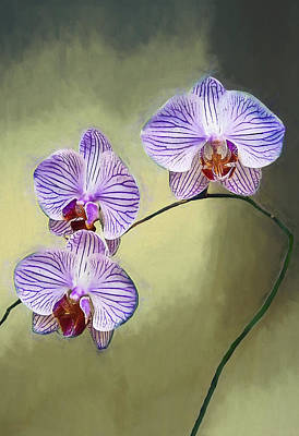 Moth Orchid Poster by Marcia Colelli