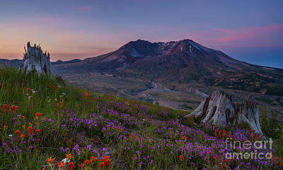 Mount St Helens Spring Colors Poster by Mike Reid