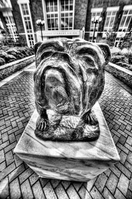 Msu Bulldog Black And White Poster by JC Findley