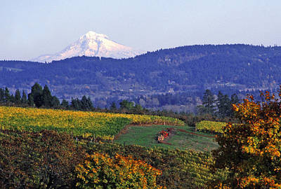 Mt. Hood From A Dundee Hills Vineyard Poster by Margaret Hood