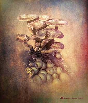 Mushrooms Gone Wild Poster by Marvin Spates