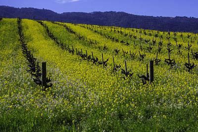 Mustard Grass Landscape Poster by Garry Gay