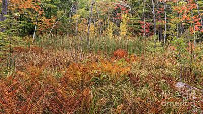 My Backyard In Autumn Poster by Edward Fielding