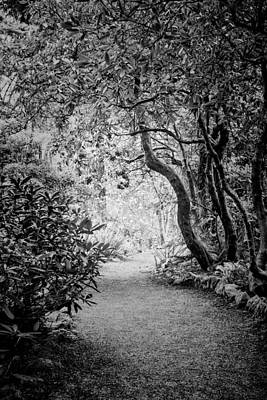 Mysterious Pathway Poster by Priya Ghose