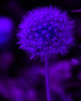 Neon Purple Dandolion Poster by Lesa Fine