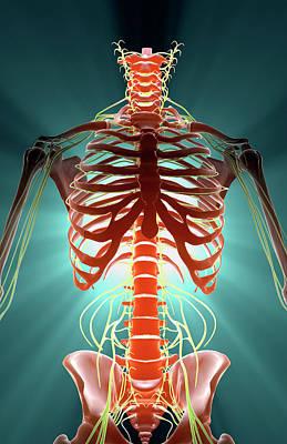 Nerves Poster by MedicalRF.com