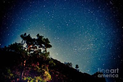 Night Sky Scene With Pine And Stars Poster by Raimond Klavins