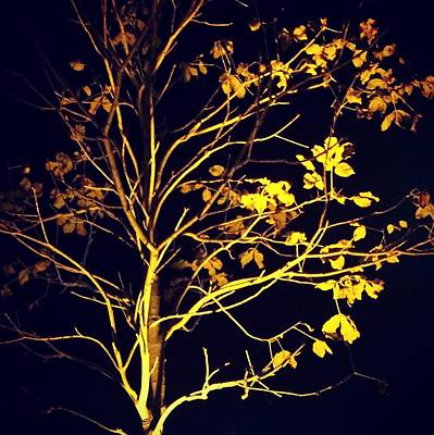 Nocturnal Tree Poster by Contemporary Art