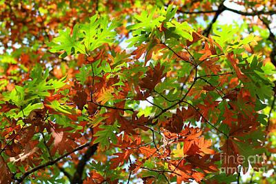 Oak Leaves Poster by Karen Adams